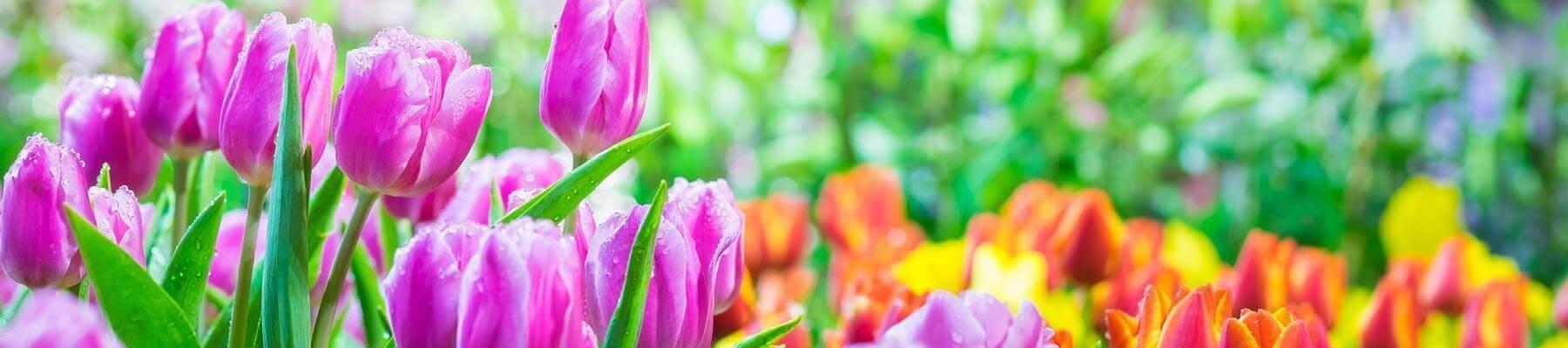 Vibrant Healthy Flowers